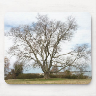 Blank - Wisdom Tree Mouse Pad