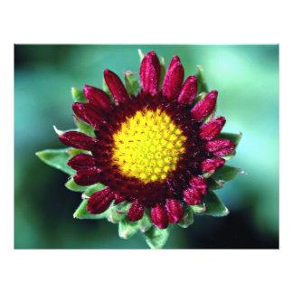 Blanket flower full color flyer