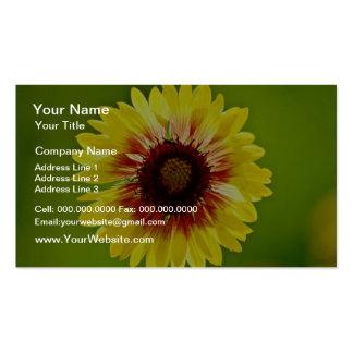 Blanket flower, gaillardia aristata  flowers pack of standard business cards