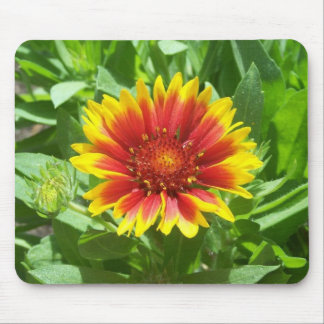 Blanket  Flower in Colorado Mouse Pad
