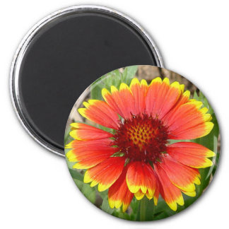 Blanket Flower Magnet