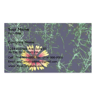 Blanket flower pack of standard business cards