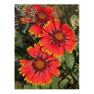 Blanket Flowers Postcard