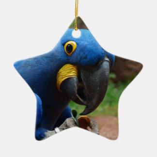 blauaras parrot christmas ornament