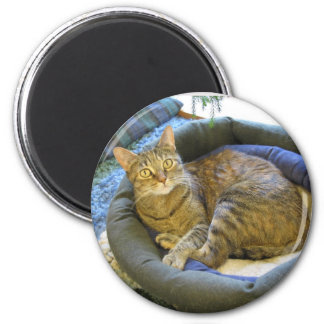 Blaze Cat Reclines 6 Cm Round Magnet