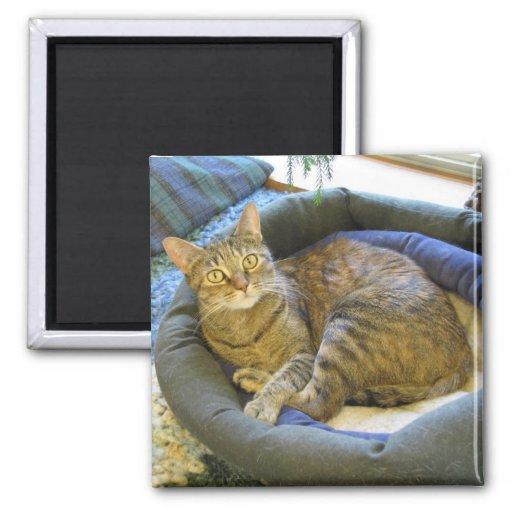 Blaze Cat Reclines Refrigerator Magnet