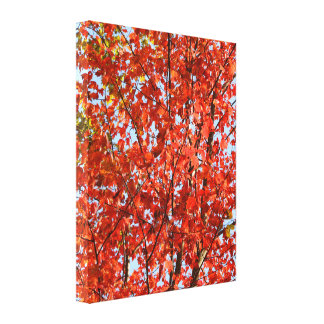 Blazing Red Autumn Leaves Canvas Prints