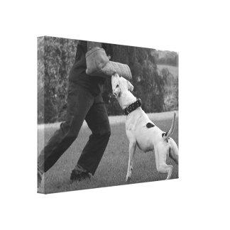 Blcak and white Schutzhund American Bulldog canvas Canvas Prints