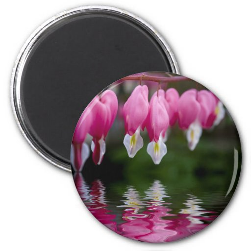 bleeding heart flower refrigerator magnet