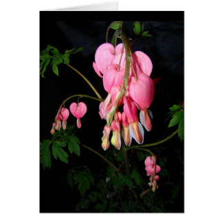 Bleeding Heart Flowers Card