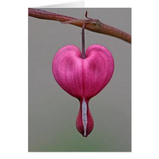 Bleeding Heart Flowers Greeting Card