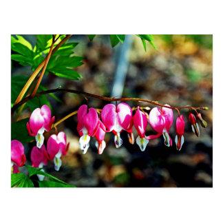 Bleeding Heart Flowers Postcard