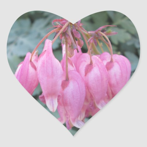 Bleeding Heart Pink Close Sticker