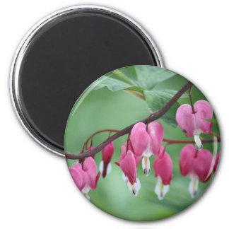 Bleeding Hearts 6 Cm Round Magnet