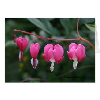 Bleeding Hearts Card