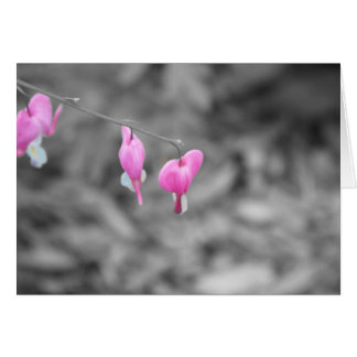 Bleeding hearts Door county Card