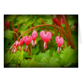 Bleeding Hearts Floral Greeting Card, all occasion Card