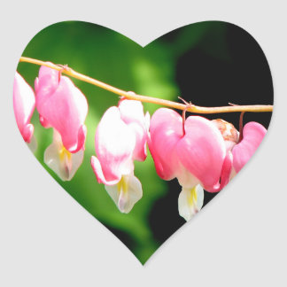 Bleeding Hearts flower Heart Sticker