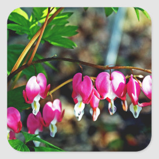 Bleeding Hearts Flowers Square Sticker