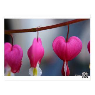 Bleeding Hearts Postcard