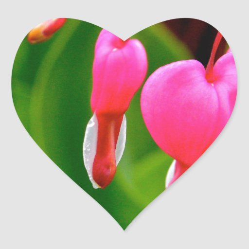 Bleeding Hearts Sticker
