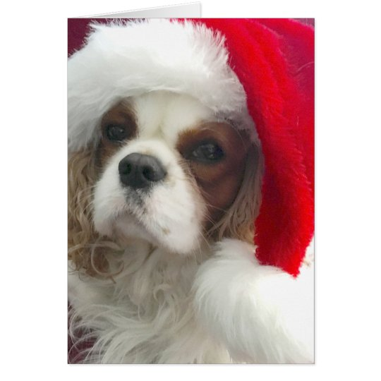 Blenheim Cavalier Christmas Card