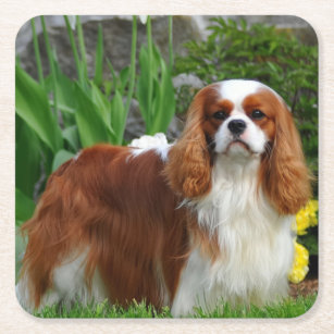 Details about  /Cavalier King Charles Marble Drink Dog Coasters Cavalier King Charles Gift