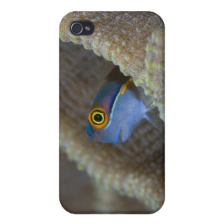 Blenny fish Blenniidae) poking it's head out Cover For iPhone 4