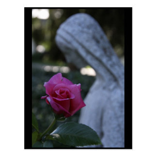 Blessed Virgin Mary the Rose Postcards