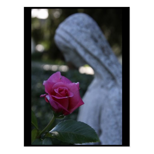 Blessed Virgin Mary & the Rose Postcards