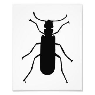 Blister Beetle Silhouette Photo Print