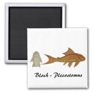 Bloch - Plecostomus magnet