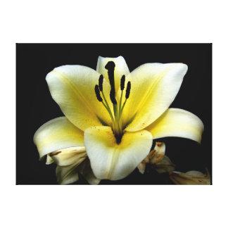 blomma  filmduk canvas prints