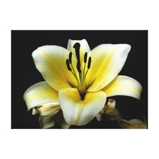 blomma  filmduk stretched canvas print