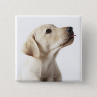 Blond Labrador puppy sticking out tongue 15 Cm Square Badge