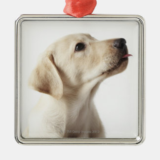 Blond Labrador puppy sticking out tongue Christmas Ornament