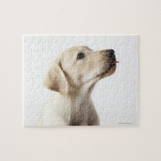 Blond Labrador puppy sticking out tongue Jigsaw Puzzle