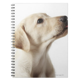 Blond Labrador puppy sticking out tongue Notebook