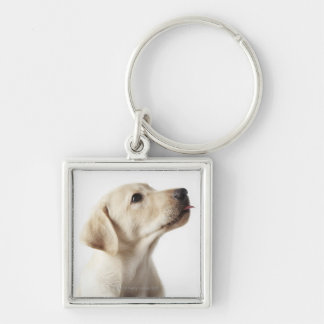 Blond Labrador puppy sticking out tongue Silver-Colored Square Key Ring
