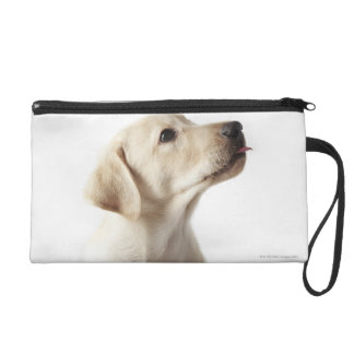 Blond Labrador puppy sticking out tongue Wristlet