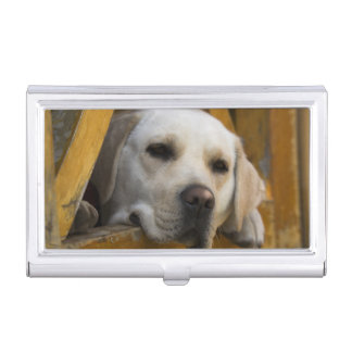 Blond Labrador retriever, Patagonia, Chile Business Card Case