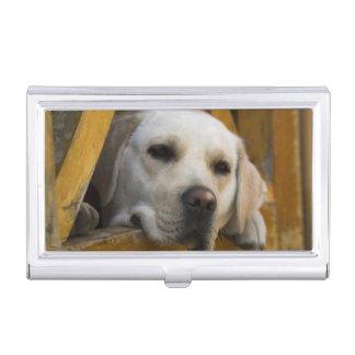 Blond Labrador retriever, Patagonia, Chile Business Card Holder
