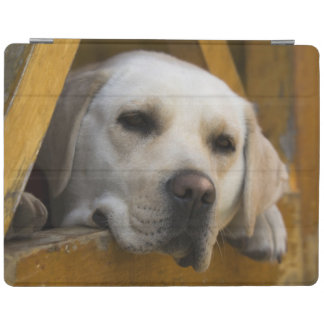 Blond Labrador retriever, Patagonia, Chile iPad Cover