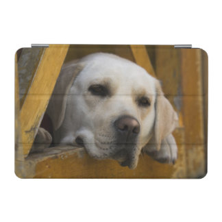 Blond Labrador retriever, Patagonia, Chile iPad Mini Cover