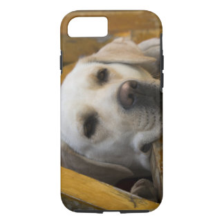 Blond Labrador retriever, Patagonia, Chile iPhone 8/7 Case