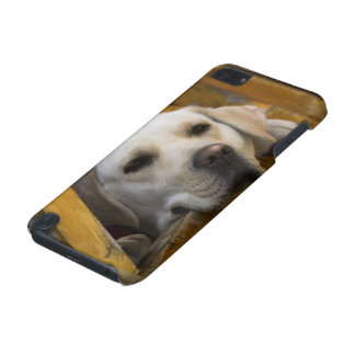 Blond Labrador retriever, Patagonia, Chile iPod Touch (5th Generation) Cover