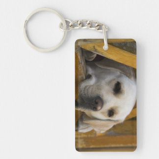 Blond Labrador retriever, Patagonia, Chile Key Ring