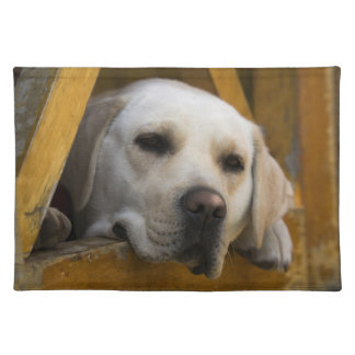 Blond Labrador retriever, Patagonia, Chile Placemat