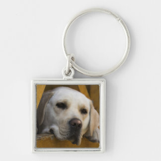 Blond Labrador retriever, Patagonia, Chile Silver-Colored Square Key Ring