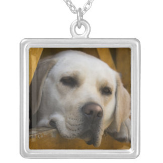 Blond Labrador retriever, Patagonia, Chile Silver Plated Necklace